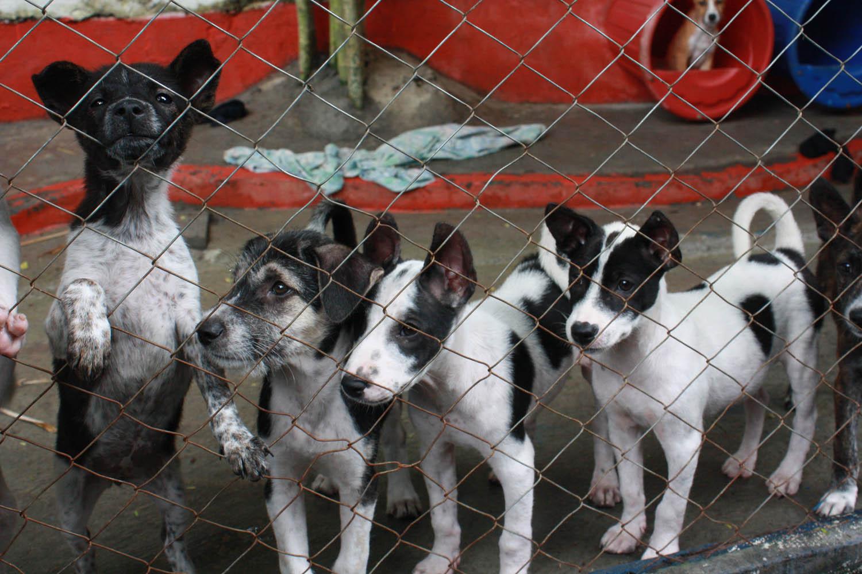 Menyelamatkan Anjing Bali dari Jalanan